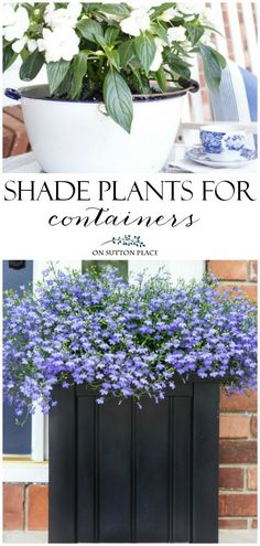 Easy ideas for shade plants for containers. Includes annuals such as new guinea impatiens, begonias, ferns and more. #containergardening #shade #gardening #gardenideas #flowers #plants