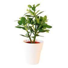De sju växterna som bäst rensar ditt hem på kemikalier Obesprutat.com