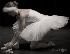 Preparing the swan