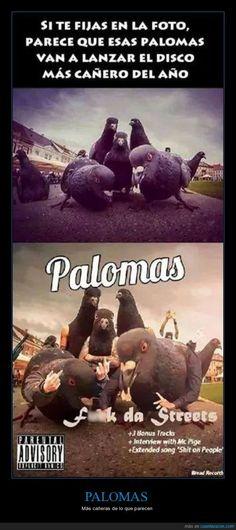 Palomas oh yeah Cat Memes, Dankest Memes, Funny Images, Funny Pictures, Spanish Memes, Quality Memes, Jojo's Bizarre Adventure, Funny Jokes, Geek Stuff
