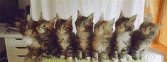 17 macska, akik úgy riszálják, ahogy senki más - vicces gifek
