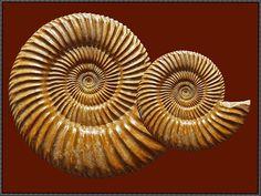fossil wurde in Frankreich, Caen aufgenommen und hat folgende Stichwörter: Normandie,  Fossilien,  Ammoniten.