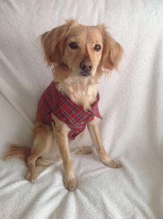 Dog cloths, red shirt. Chaleco de perro. Reversible. Diseño exclusivo. de MuckaPets en Etsy