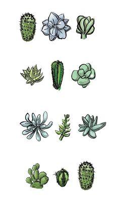 One Dozen Succulents Art Print by Yellow Kitchen Studio - X-Small Succulents Wallpaper, Succulents Drawing, Cactus Drawing, Watercolor Succulents, Plant Drawing, Cacti And Succulents, Succulents Painting, Propagating Succulents, Planting Succulents