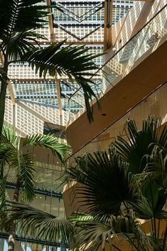 A green hotel in every sense of the word. Bamboo flooring, panels, wall coverings, slats etc. Jakarta, Amsterdam, Plant Leaves, Bamboo, Daddy, Sugar, Flooring, Money, Wall