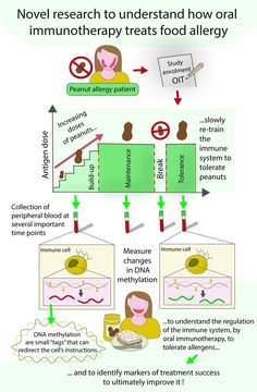Peanut Allergy, Food Allergies, Immune System, Research, Closer, Campaign, Study, Science, Posts