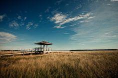Grand Manan NB | Look All Around  The Castalia Marsh by Ian Nicholson
