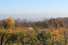 Herbst in den Wiener Weinbergen