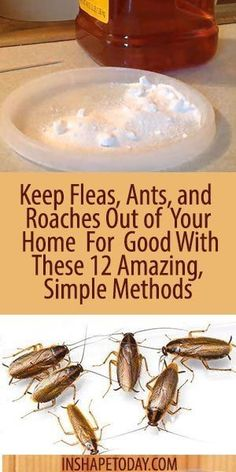 Keep Fleas, Ants, and Roaches Out of Your Home For Good With These 12 Amazing, Simple Methods - InShapeToday