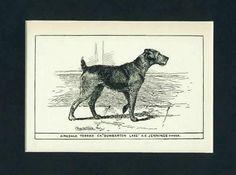 Antique Airedale Print
