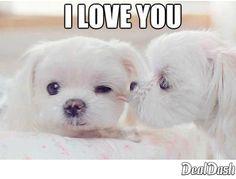 #love #puppies #cute