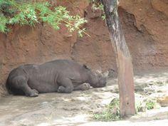 Los animales más viejos no tienen mucho que hacer en sus hábitats.