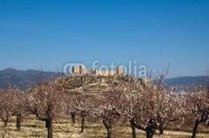 Spanish Castle with almonds tree flowering