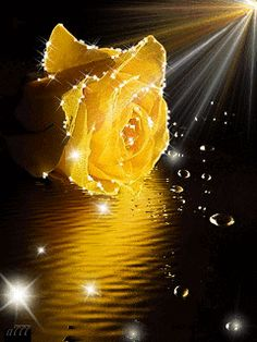 March, the month of Awareness 💛 Good Morning Roses, Good Morning Beautiful Images, Beautiful Flowers Pictures, Beautiful Gif, Flower Pictures, Amazing Flowers, Beautiful Roses, Pretty Flowers, Flowers Gif