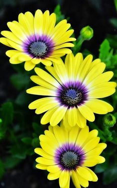 Full Drill Diamond Painting Kit,Diamond Painting Kits for Kids for Home Wall Decor Yellow Daisy 1 Pack by SingyaBRA Wonderful Flowers, Love Flowers, Yellow Flowers, Colorful Flowers, Flower Images, Flower Pictures, Flowers Nature, Exotic Flowers, Beautiful Flowers Wallpapers