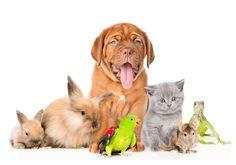 Animals For Kids, Animals And Pets, Baby Animals, Funny Animals, Shrek, Akita, Animal Paintings, Animal Drawings, Bulldogs