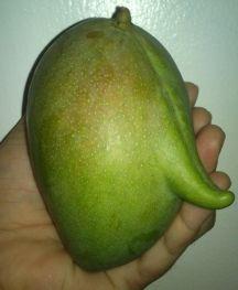 Mango by Julie Marie Cortez.