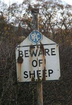 Beware of Sheep sign