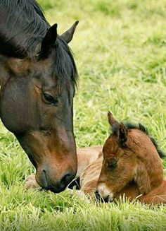 IT'S A GIRL! Australian turf racing queen BLACK CAVIAR and her baby filly by EXCEED AND EXCEL #horseracing #Foal