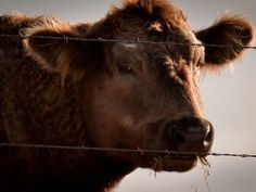 Why You Should Be Worried About the California Mad Cow Case