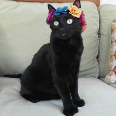 Meet Sophie, a Fashion Model and Ambassador for Black Cats.   Rescued from a trash container, this cat has found a home and a way to spread joy.