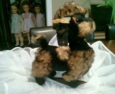 Vintage Rushton company poodle being Photo-bombed by creepy doll babies.