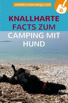 Camping mit Hund ist unvergleichlich. Nicht immer schön, nicht immer leicht, aber unvergleichlich. Knallharte Facts und ein Blick hinter die Kulissen. Camping Gadgets, Travel Companies, Fox Terrier, Van Life, Travel Destinations, Road Trip, Pup, Explore, World