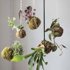 Learn how to make kokedamas for your home or garden with this fun project.data-pin-do=