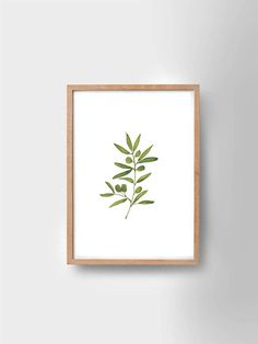 OLIVE TREE | olive tree print | high quality poster | botanical | leaf poster | nature print | Scandinavian style | hand-draw | simple |