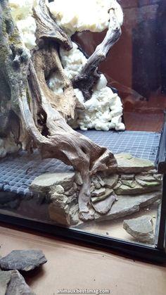 Click the image to open in full size - Aquarium - Reptile Habitat, Reptile Room, Reptile Cage, Reptile Enclosure, Tarantula Enclosure, Terrariums Gecko, Bartagamen Terrarium, Terrarium Reptile, Gecko Vivarium