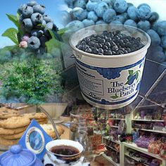 Ohio's Premier Blueberry Plantation: The Blueberry Patch in Mansfield, Ohio
