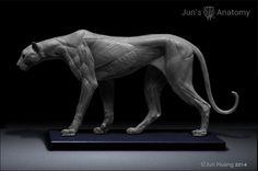 Cheetah Anatomy model