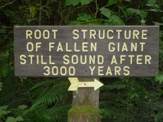 WOW!  The root structure of this fallen giant redwood is still sound after 3000 years.  Trees of Mystery, Klamath, CA.  Go to http://www.yourtravelvideos.com/view.php?view=120205 or click on photo for video and more on this site.