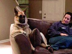 Pets Fabulosas - La Casa de las Mascotas  #animallovers #funnyvideos #catlovers #pets #animals