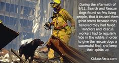 dogs of 9/11 | Rescue Dogs Couldn't Handle The Loss Of Life & Hope During 9/11
