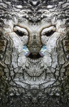 Dream Creatures: Reflected Images of Tree Bark Reveal the Faces Hiding in the Forest Italian photographer Elido Turco spent four years between 2004 and 2008 exploring a mirrored photography world that remains invisible to most of us. By tak Peter Wohlleben, Cave Drawings, Tree People, Tree Faces, Disney Artists, Tree Carving, Wood Carving, Unique Trees, Tree Bark