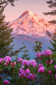 TINA expressions-of-nature: Rhododendron Alpine Glow by: Gary Randall Beautiful Nature Wallpaper, Beautiful Landscapes, Beautiful World, Beautiful Images, Landscape Photography, Nature Photography, Night Photography, Nature Aesthetic, Mountain Landscape