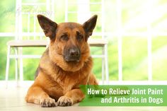 How to Relieve Joint Paint and Arthritis in Dogs | Keep the Tail Wagging by Raising Dogs Naturally