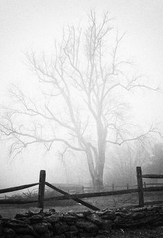 A tree in the mist...subtlety