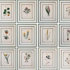 Spring is in the air today! We love this exquisite set of 12 Botanical Engravings. The full set can be bought from @julia_boston_antiques. Stop by today after visiting the @decorativefair #spring #engravings #batterseadecorativefair by theworldofinteriorsmagazine