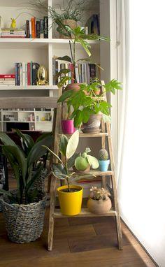Escalera para plantas. Antes y después