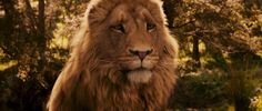 Pictures Of Narnia The Lion The Witch And The Wardrobe - Wallpaper ...