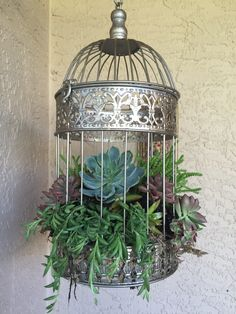 diy succulent bird cage planter i found these bird cages at home goods i first put sand on the. Black Bedroom Furniture Sets. Home Design Ideas