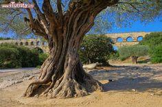 Vers-Pont-du-Gard /  LianeM / Shutterstock.com Tutte le foto: http://www.ilturista.info/ugc/foto_viaggi_vacanze/vers_pont_du_gard/linguadoca_rossiglione/