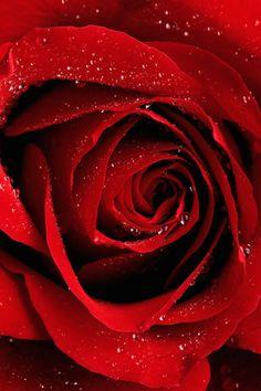 Rose Pedal