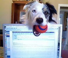 Pets Preventing Productivity