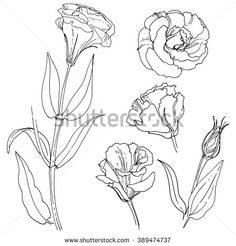 lisianthus drawing, beautiful thin fine line flower tattoo