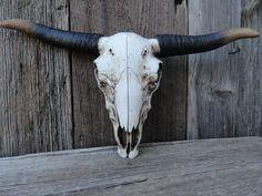 Cow Skull Faux Taxidermy Longhorn Skull Steer Skull by JUNKINTIME, $64.50