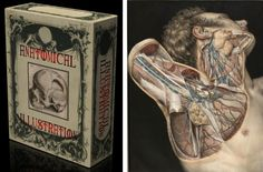 Vintage Anatomy Pictures...can you imagine something like this as a tattoo? That would be awesome!