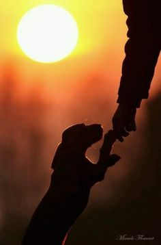 Dachshund silhouette with sun setting in the background I Love Dogs, Cute Dogs, Funny Dogs, Mans Best Friend, Best Friends, True Friends, Tier Fotos, Dog Quotes, Belle Photo